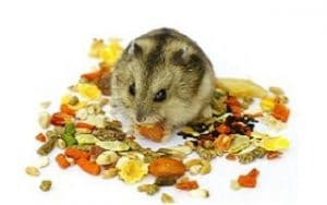 Best Foods For Hamsters