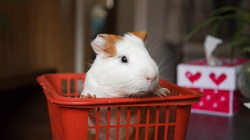 Best Hamster Carrier Bag
