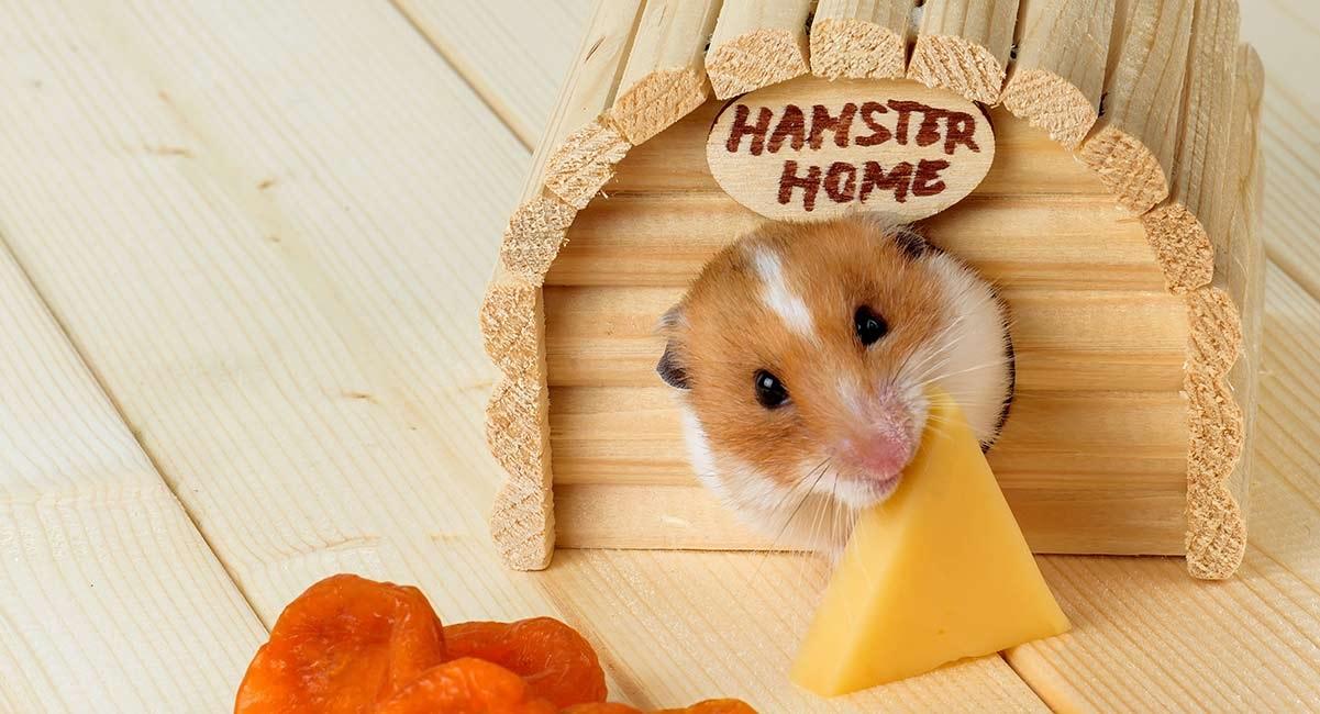 Best Hamster Toys