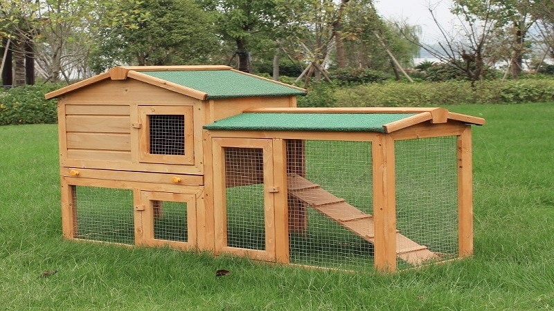 Best Outdoor Rabbit Hutch