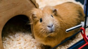 Best Guinea Pig Water Bottles
