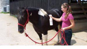 Best Fly Spray for Horses