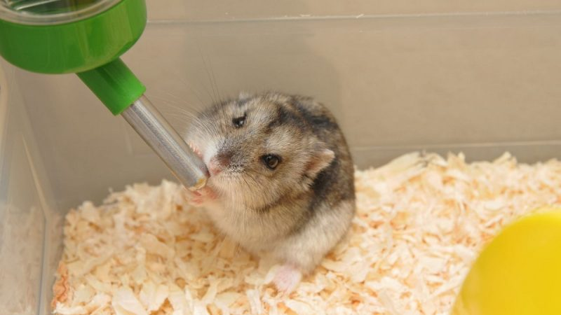 Best Water Bottles For Hamsters
