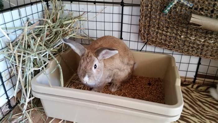Best Litter for Rabbits