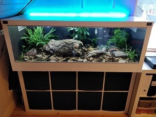 Best Ball Python Enclosure