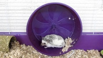 Best Hedgehog Wheel