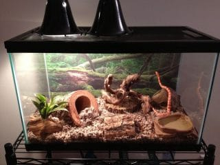 Best Corn Snake Enclosures