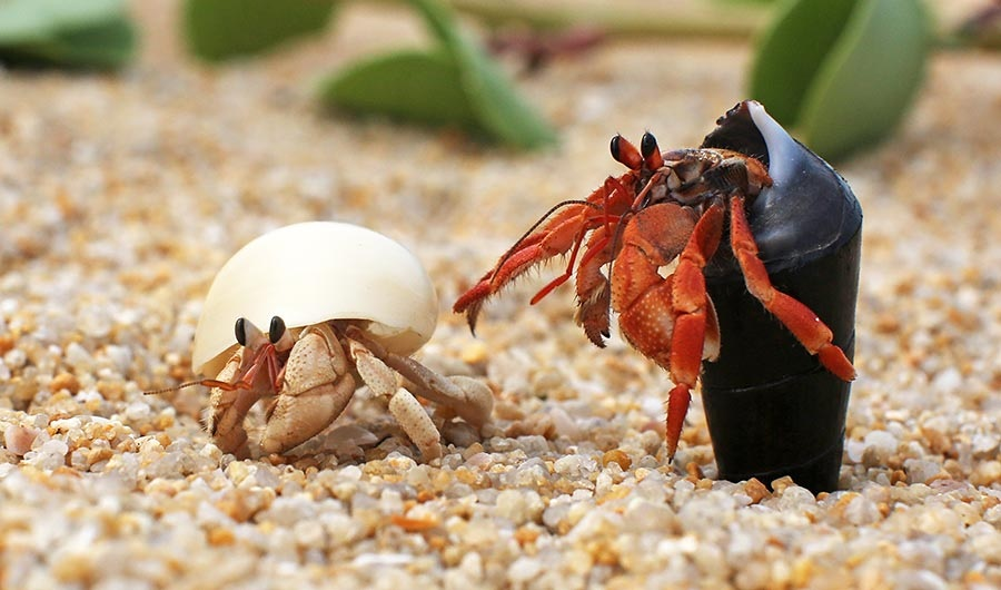 https://happyhomepets.com/wp-content/uploads/2019/12/Best-Hermit-Crab-Habitat-1.jpg