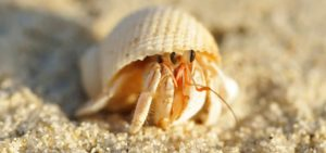 Hermit Crab Eating Food