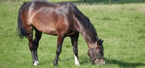 Calm Horse