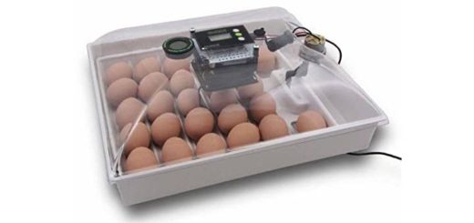 Incubator for Chicken Eggs