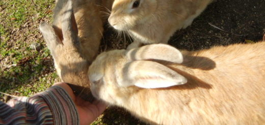 Rabbit Eating Food from Hand