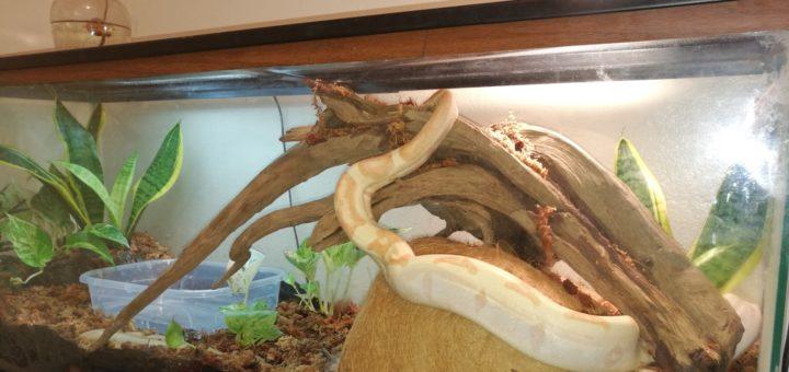 Reptile Humidifier