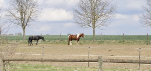 Electric Fence for Horses