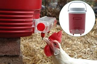 Best Chicken Waterer