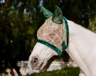 Best Fly Mask for Horses