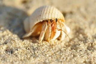 Best-Hermit-Crab-Substrate