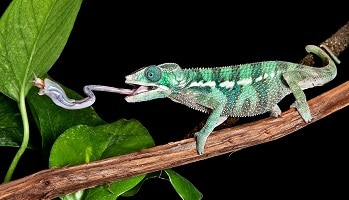 Best-Plants-for-Chameleons