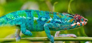 Plants for Chameleons