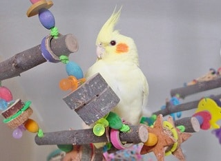 Best Bird Toy