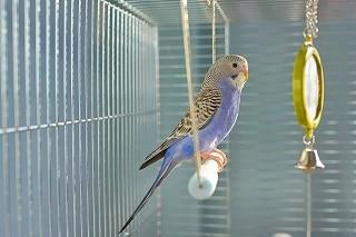 Best-Parakeet-Cage