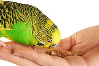 Best Parrot Food