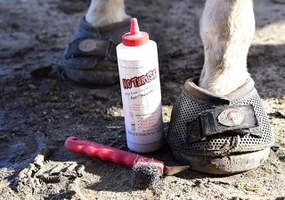Best Thrush Treatments for Horses