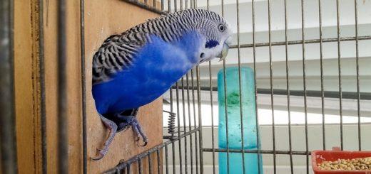 Parakeet Cage