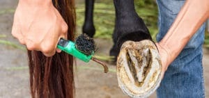 Thrush Treatments for Horses