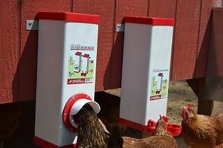 best-chicken-feeders