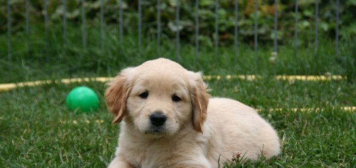 Crates Puppy Training