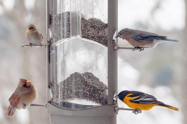 Best Food for Birds