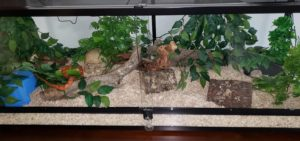 Corn Snake Enclosures