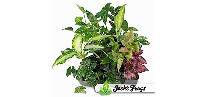 Josh's Frogs Foliage Plant Bundle - Plants for Chameleons