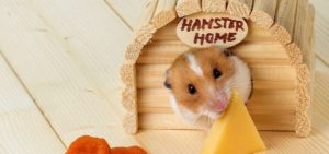 Hamster Toys