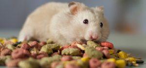 Hamsters Food