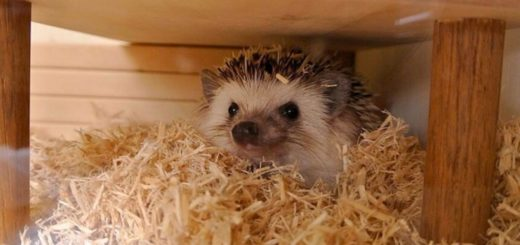 Hedgehog Bedding