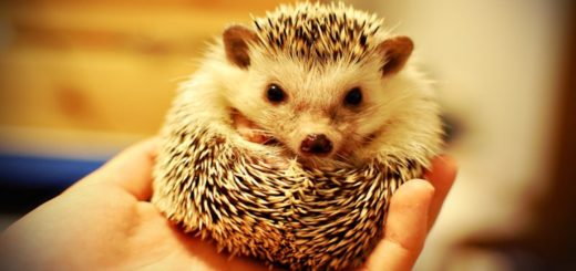 Hedgehog Out of Cage