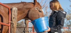 Horse Feed for Weight Gain